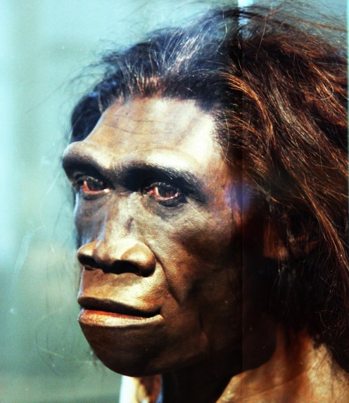 A model of the face of an adult female Homo erectus, one of the first truly human ancestors of modern humans, on display in the Hall of Human Origins in the Smithsonian Museum of Natural History in Washington, D.C.