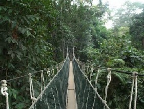 The bridge at Taman Negara rainforest is a long and very high walk but it is very safe.