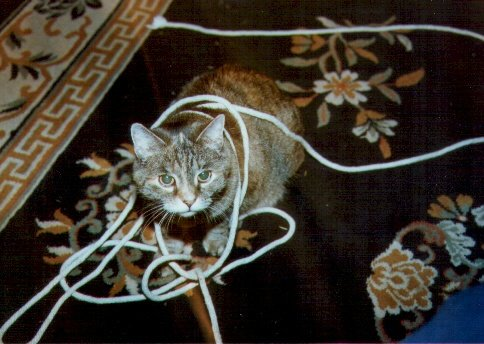 We had a rousing game of chase the rope in the living room. I let Gypsy have the satisfaction of catching it (while I grabbed my camera)