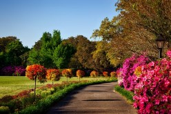 How to Beautify your Yard and Increase your Property's Value with these Lovely Trees, Shrubs, and Bushes