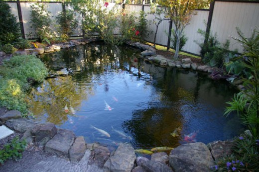 How to build an outdoor fish pond for Large outdoor fish ponds