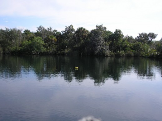 Artifacts found in sinkholes around Florida, like Little Salt Spring, have helped our understanding of when humans inhabited North America.