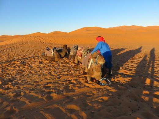 Camel riding, Sahara