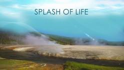 ....Add a Splash of Life