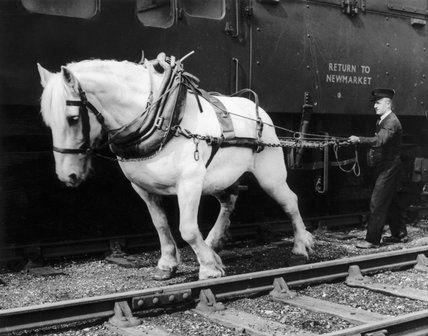 Shunting horse with driver. The horses used tended to be the 'Shire' type, Clydesdales or Suffolks