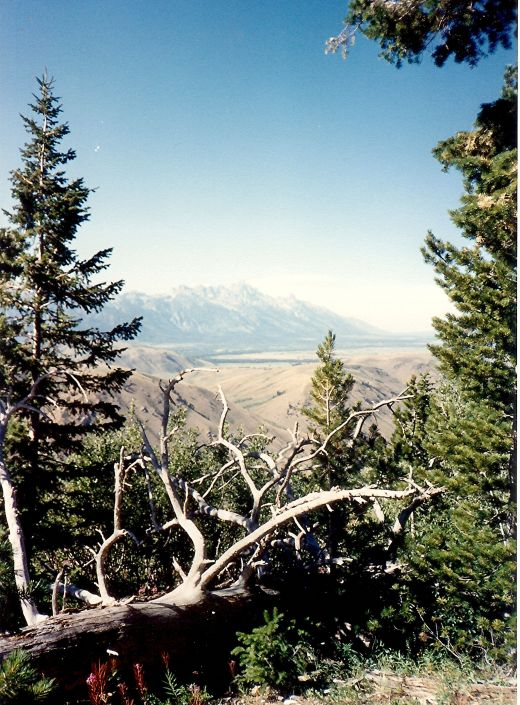 Some of the scenery enjoyed on the nature trail at the top of Snow King Mountain.