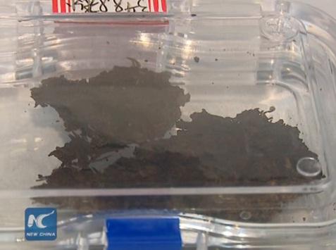 The world oldest tea leaves