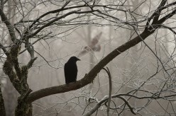 The Three Crows of Chaos, Death and Rebirth