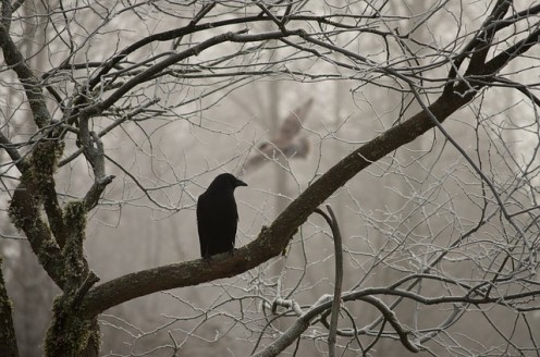 A lowly svelte grey horizon. The Crow stands by.