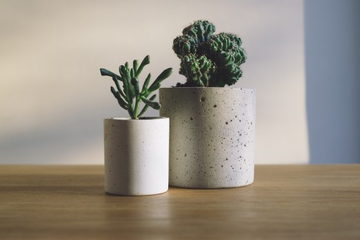 Finding hardy plants is the key to keeping your indoor plant hobby affordable.