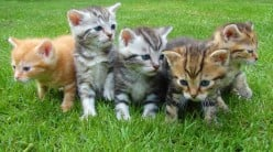 10 Ways to Care for a Kitten