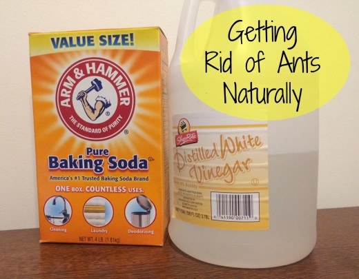 How to get rid of ants naturally with items you already have in the kitchen.