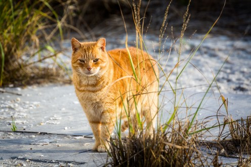 The Beloved Boardwalk Cats of Atlantic City and the Alley Cat Allies