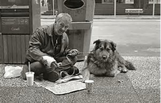 A loved dog will always show loyalty through the worst of times.