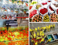 Hong Kong: Goldfish, Songbird, and Flower Markets