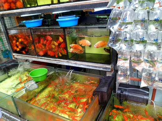 Wide selection of aquarium fish for sale.