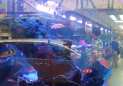 Saltwater aquarium in front of a shop.