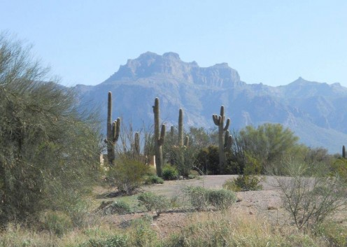 Death in the Arizona desert.