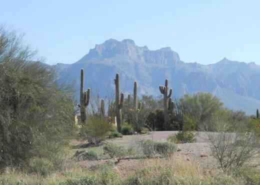 Desert Near Mesa Arizona