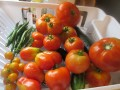 Harvest Time for Tomatoes and Zucchini  (What to do With The Bounty)