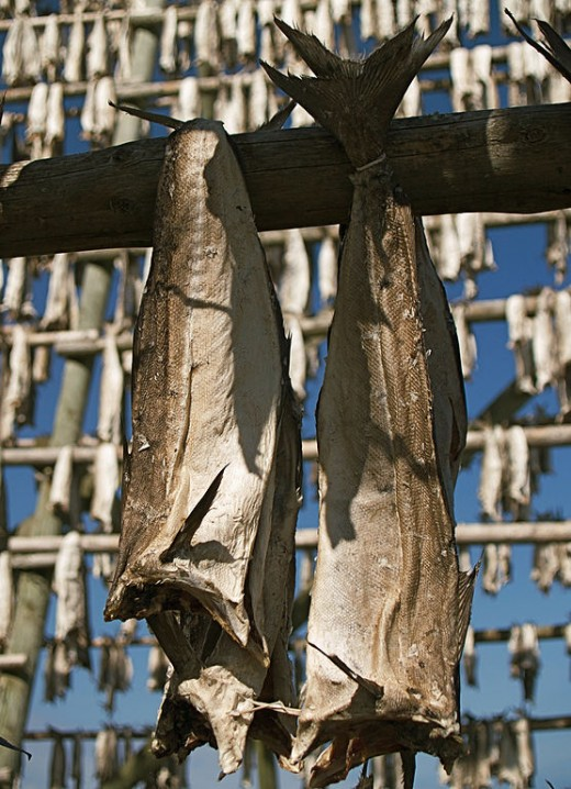 Stockfish hung up to dry in Norway.