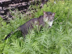 Pros and Cons of Outside Cats