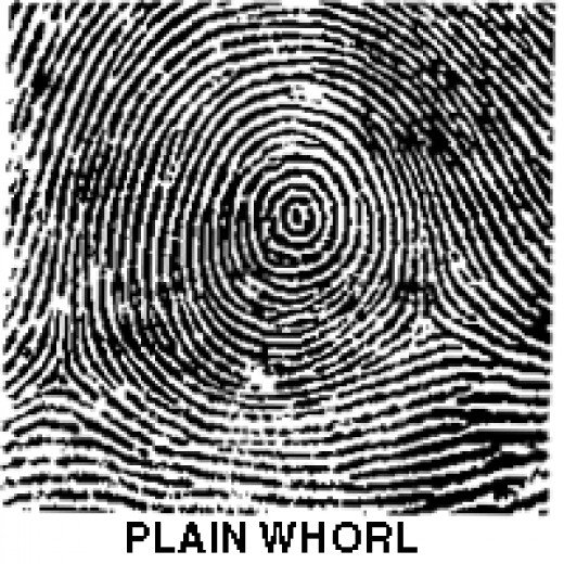 plain whorl