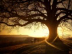 The Stone Tree