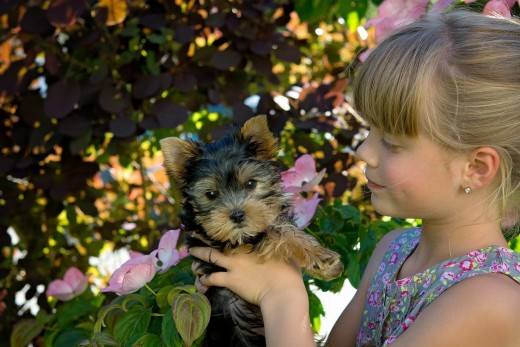 It's important that you make sure you pick the right puppy, for both you and the pet.