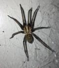 DIY Spider Pest Control