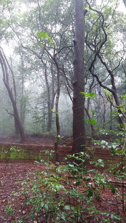 Fog in the forests of Matheran in monsoon