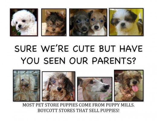Have a look at the mother dogs at puppy mills