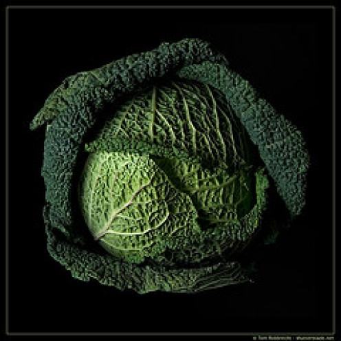 Essential Ingredient a Head of Cabbage.