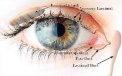 Dry Eye Syndrome  or Keratoconjunctivitis Sicca