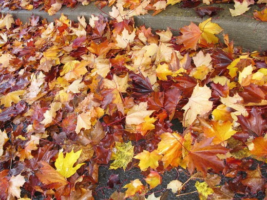 Fallen leaves can be great for wading through and collecting into piles for play.