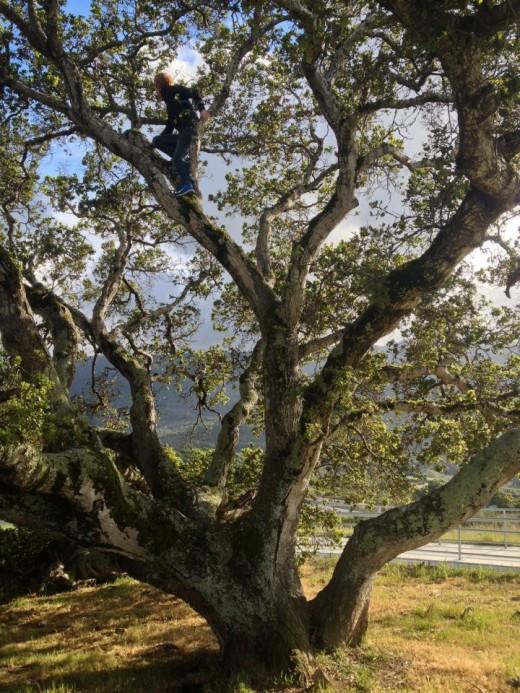Tree Climbing in Colorado