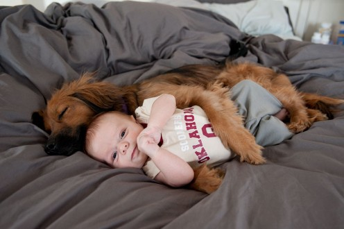 If your dog is babysitting for you, he takes his job seriously and keeps your baby close at all times.