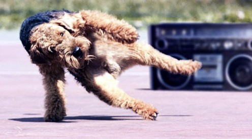 Pets will dance to any beat, no matter what the musical genre.