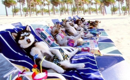 Yes, I'm sure it's safe to say that these dogs are happy vacationers.