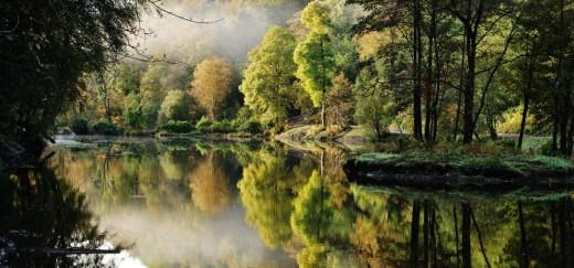 Penllegaer Woods