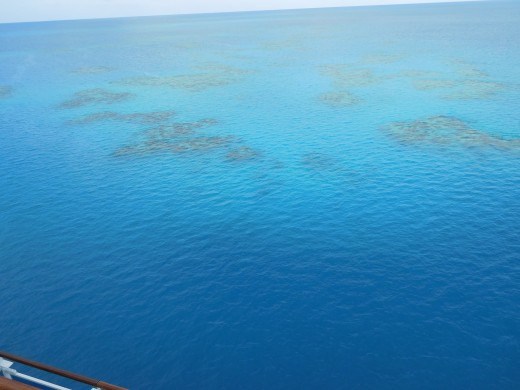Coral reef in the water surrounding Bermuda.
