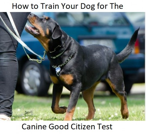 How to Train Your Dog for the Canine Good Citizen Test
