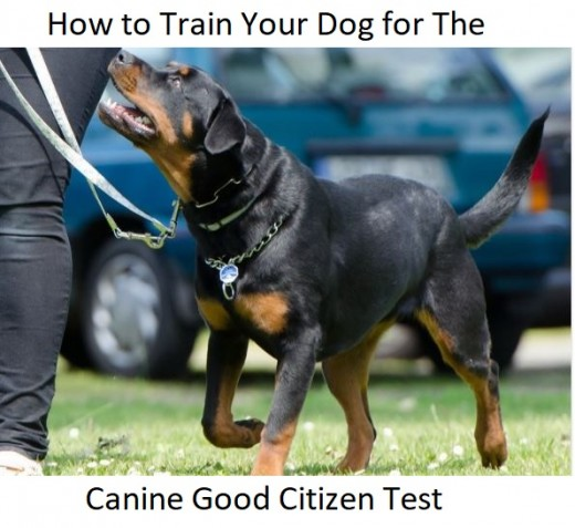 How To Become Certified To Train Therapy Dogs