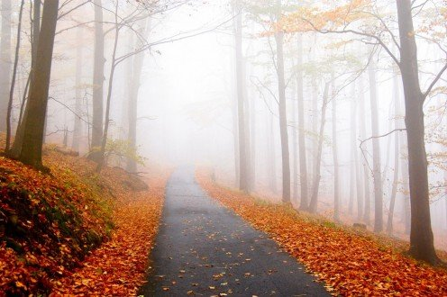 16 Writing Prompts for Autumn