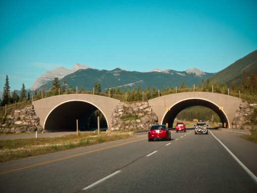 These structures in Alberta, Canada, were built to enable animals to safely cross the highway.