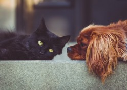 Great Beginner Pets: Dog or Cat