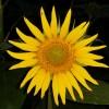 Paul Turner 2nd profile image