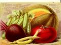 Vegetables in Winter
