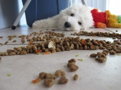 Selecting Quality Dog Food