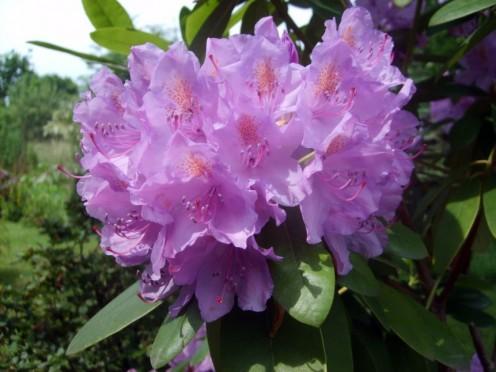 Pretty Purple Color - (Macro Photography)
